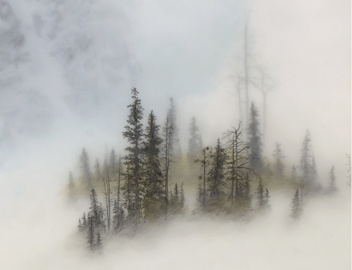 Фотографии с туманом