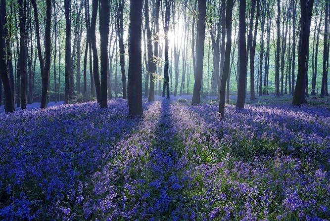 bluebell-sunrise-google-chrome
