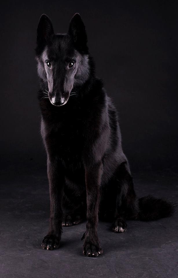 Oscar Barcelona «Sirius Black»