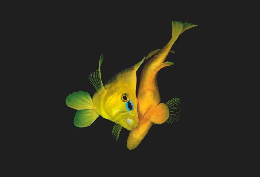 «Незабываемая подводная фотография»