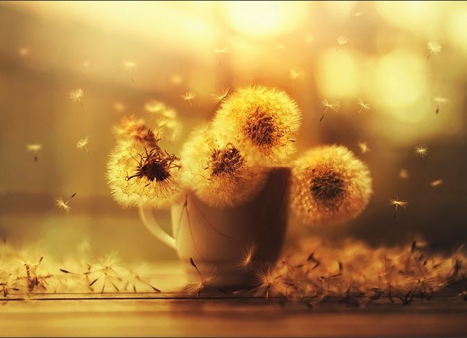 "Ashraful Arefin ""Цветы"""