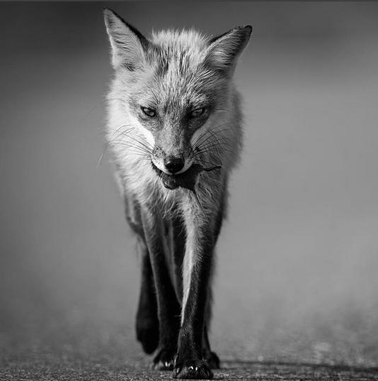 "Eric Esterle ""Мир дикой природы"""