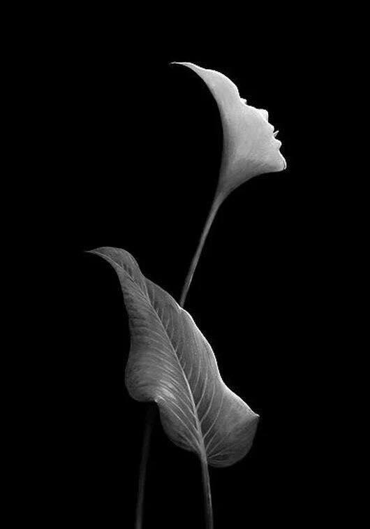красивое фото голой девушки современное искусство