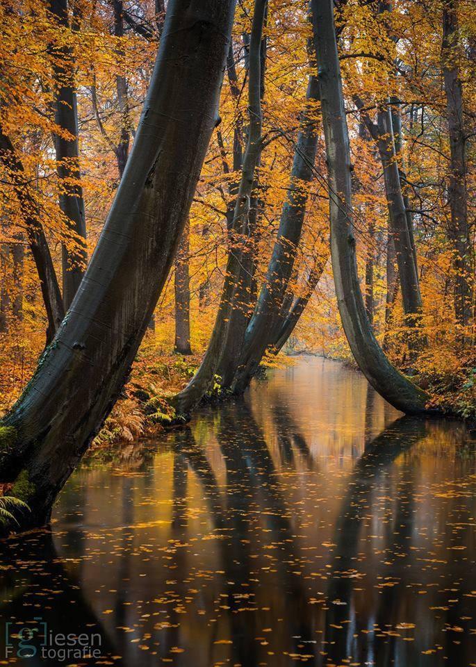 осень природа река