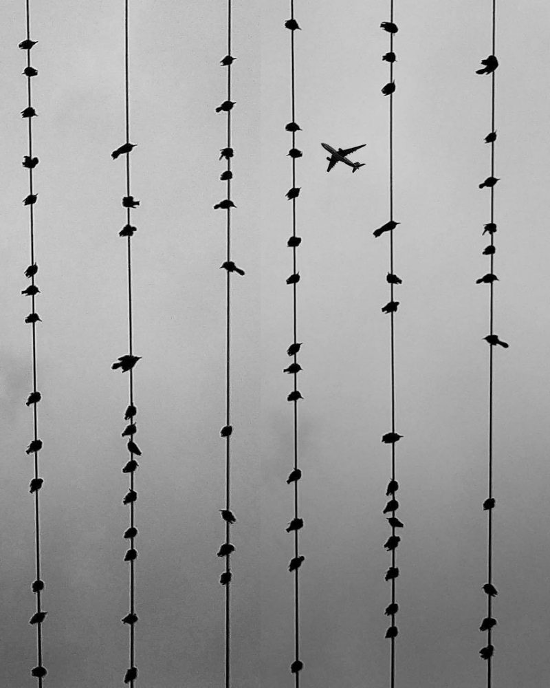 птицы и самолет