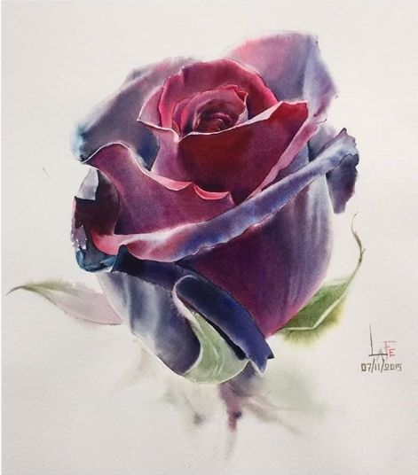 нарисованная роза