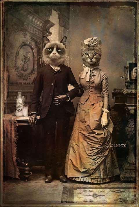 супружеская пара кот и кошка старый стиль современное искусство фотография ddiarte